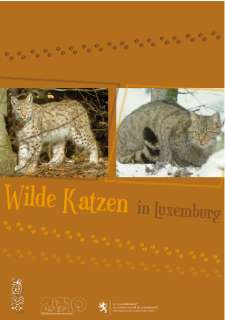 Wilde Katzen in Luxemburg