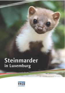 Steinmarder in Luxemburg